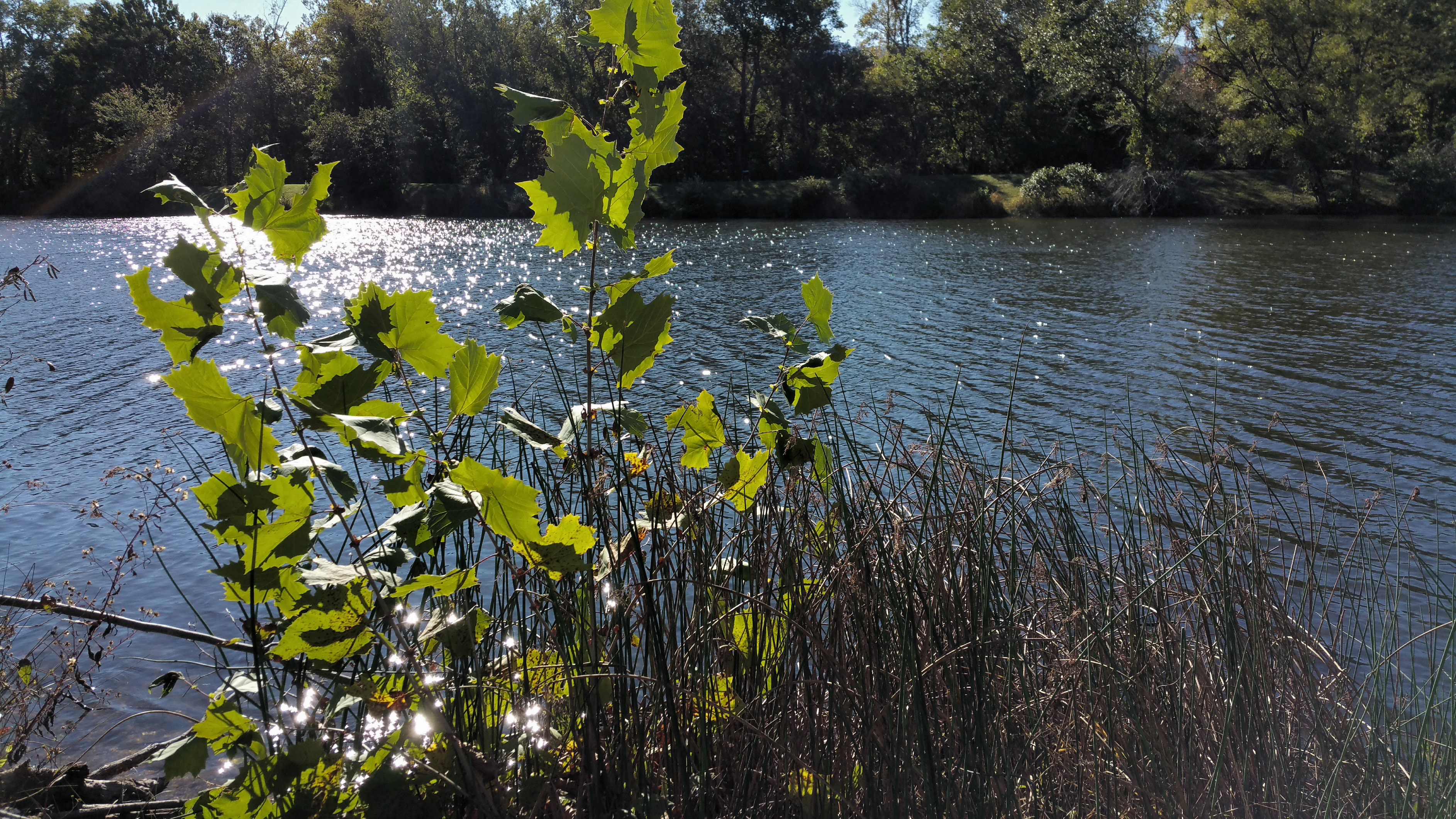 Pondering a Pond, saltwater flotation