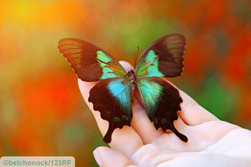 53669229 - beautiful colorful butterfly sitting on female hand, close-up - thyroid gland is like a butterfly in the anterior region of the neck