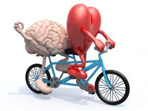 © Fabio Berti / 123RF.com - brain and heart on a tandem bike