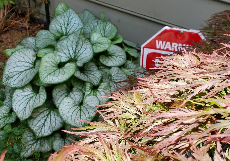 hidden warning sign in nature and plants